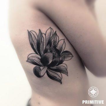 lotus rib orazio